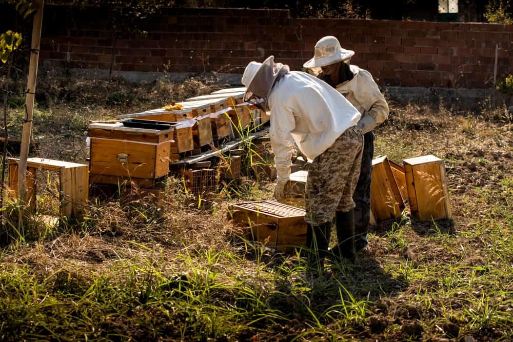 Beekeeper in protective workwear